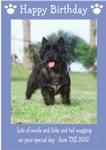 "Cairn Terrier-Happy Birthday - ""From The Dog"" Theme"